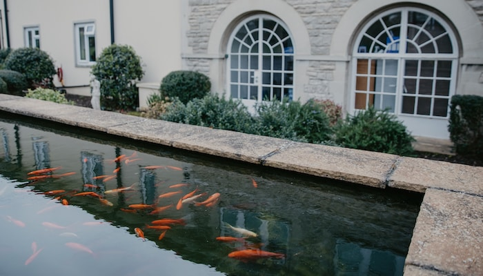 Fish pond external Swanage care home